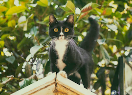 A second is all it takes – don't put your cat's life at risk by leaving your balcony, rooftop or garden unfenced.