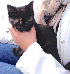 Artemis sitting on Caroline's lap the day they met