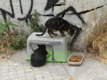 Happy meals rain or shine thanks to this waterproof feeding station at one of the downtown Athens cat colonies