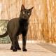 Όμορφη μαύρη γάτα με πορτοκαλί μάτια σε μπαλκόνι
