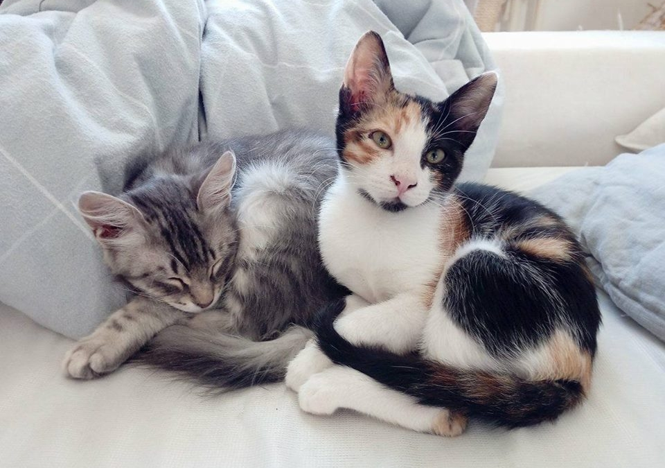 Two lovely rescue cats curled up next to each other after they were adopted