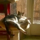 Former member of a cat colony basks in the sun in her adopted home