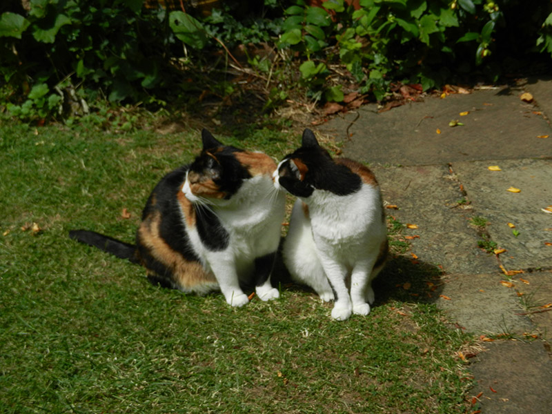 Two tricolored cats sitting next to each other, looking in the same direction