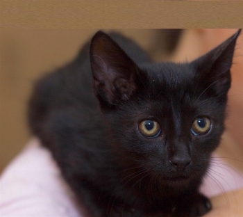 Little Iman is looking to be adopted into a forever home