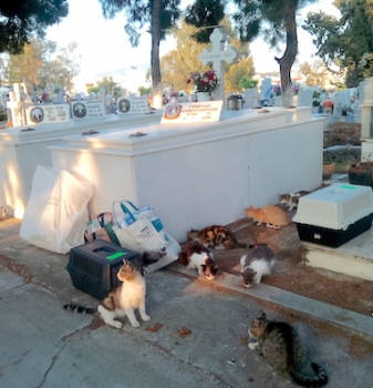 60 or so cats who live in a cemetery are about to captured for neutering