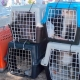 Successful mission – the first batch of cats on their way to the vet for neutering and treatment.