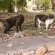 Δύο γάτες από μία γατο-αποικία στους Εθνικούς Κήπους