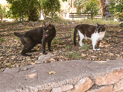 Two cats from a cat colony in the National Gardens, Bruce and Molly Sue in happier days, before their peaceful corner of the park became a target for dogs