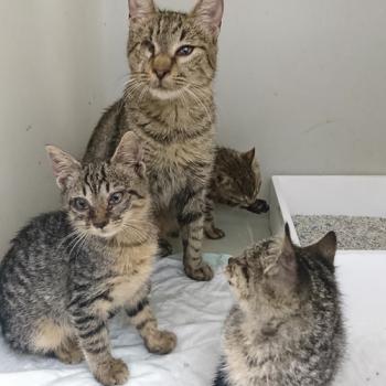 Μία μονόφθαλμη γάτα και τα γατάκια της