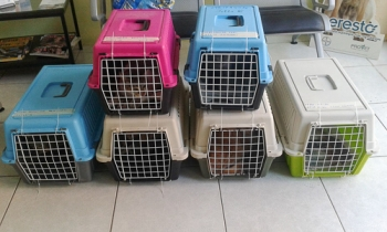 Cats in carrying cases waiting to be spayed as part of World Spay Month