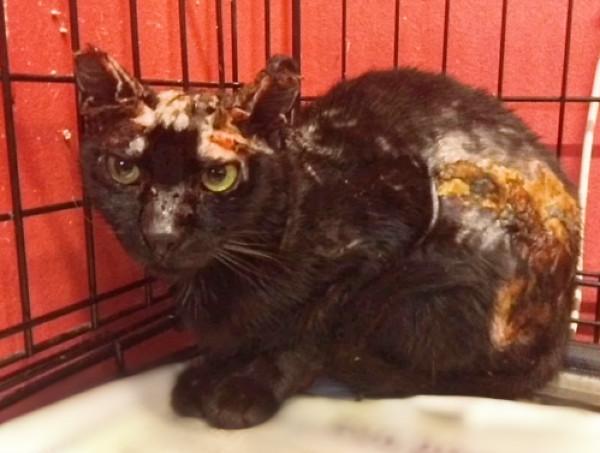 Μία γάτα με σοβαρά εγκαύματα μέσα σε κλουβί κτηνιάτρου