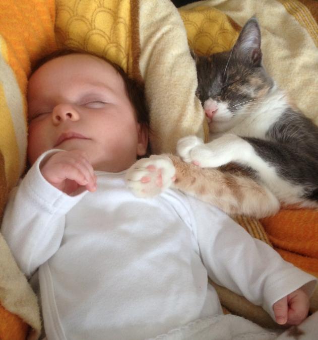 Ένα μωρό που κοιμάται μαζί με μία γάτα κουλουριασμένη δίπλα του