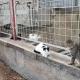 Οι γάτες του εργοστασίου, παρέα.