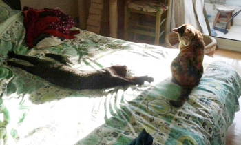 Two cats, now best friends, relaxing on a bed.