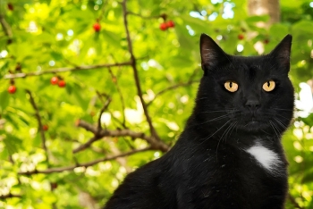 This gorgeous black cat will be on the cover of our new Nine Lives Calendar 2019