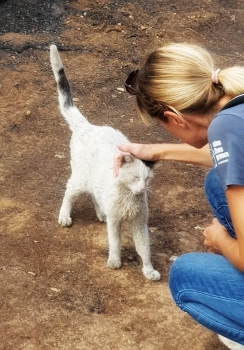 A Nine Lives volunteer pats one of the cats who survived the fires