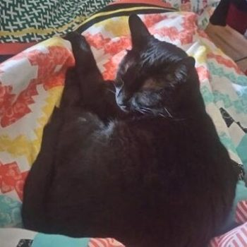 A black cat curled up on a colorful blanket