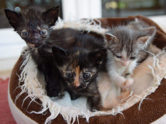 A group of cute young kittens