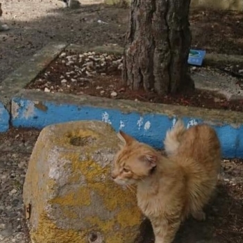 A ginger stray cat walking near a large rock