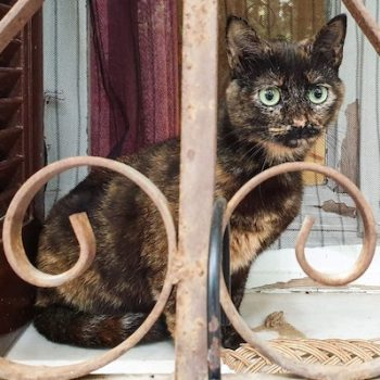 A tortoiseshell cat sitting behind an iron fence with curves