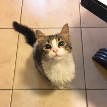A young cat looking up hoping for a treat