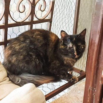 A one-eyed tortoiseshell cat sitting on a bench
