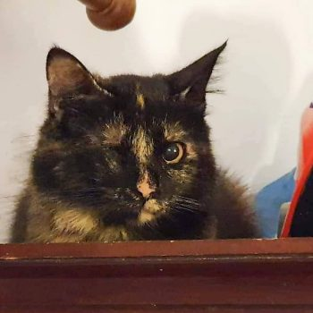 A one-eyed tortoiseshell cat looking at us intently with her good eye.