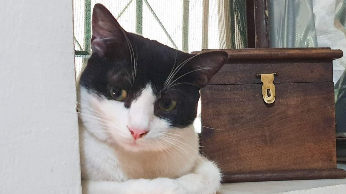 A tuxedo cat is sitting on a window porch next to a wooden treasure box.