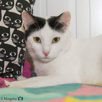 A white cat with black on her head sits next to a pillow with cat faces all over it.