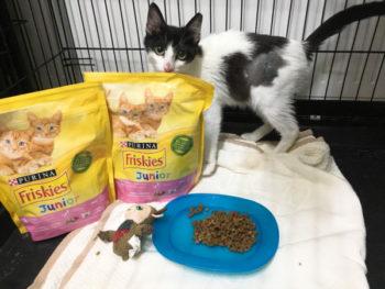 Μια ασπρόμαυρη γάτα στέκεται πίσω από γατοτροφή δωρεά της Purina.