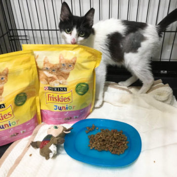 A black and white cat standing behind bags of cat food donated by Purina
