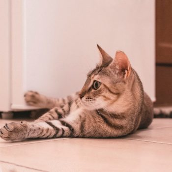 A brown tabby is lying on the floor having her paw against the fridge while looking into the distance.