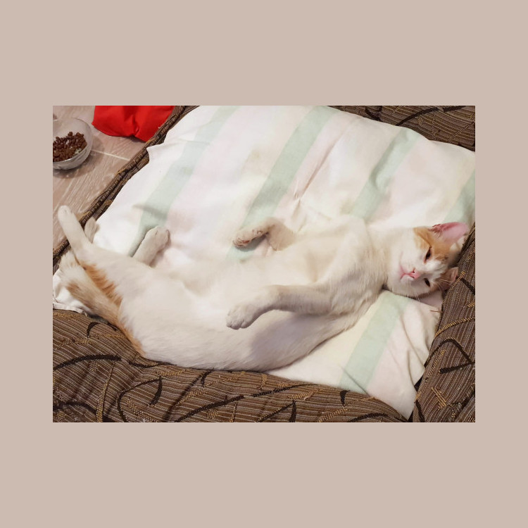 A white cat with some orange marking on his head and hind quarters relaxing on his back.