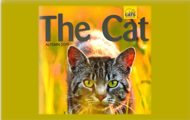 Part of magazine cover for 'The Cat'