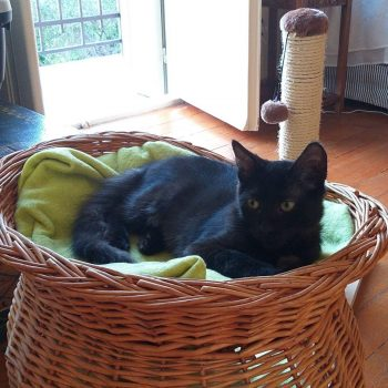 A black kitten is lying on a cat bed with a green blanket while there is a scratcher in the background.