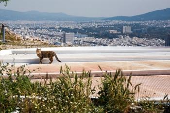 Μια πανέμορφη φωτογραφία μιας αδέσποτης γάτας με φόντο πανοραμική θέα από την πόλη της Αθήνας.