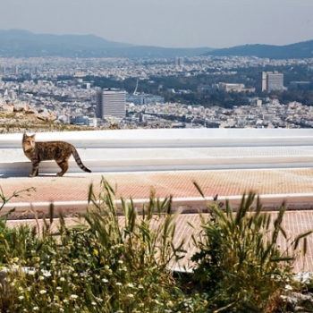 A beautiful photo of a stray cat with a scenic view of the city of Athens in the background