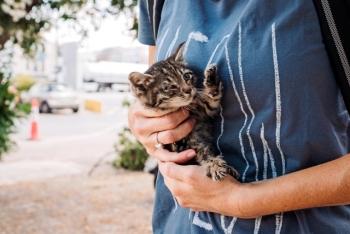 Ένας άνθρωπος κρατάει ένα πολύ μικρό τιγρέ γατάκι.