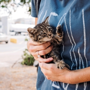 A person holding a very small tiger kitten