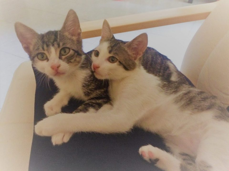 Two cute tabby kittens hugging each other on a black chair.