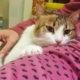 A female cat for adoption snuggled up to her foster mom