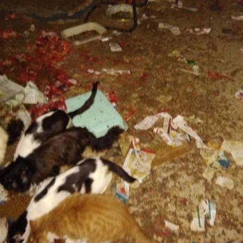 Cats eating from the floor in a filthy basement.