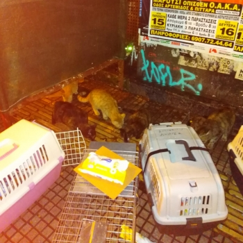 Cat traps and carriers are placed in front of stray cats in an attempt to catch them.