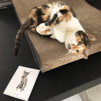 A tricolored lady cat from the streets of Athens lying on a scratching board. A card with a cat illustration lies on the table