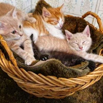 Ένα καλάθι γεμάτο γατάκια.