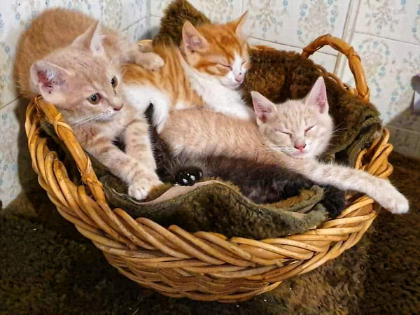 A basket of lovely kittens.