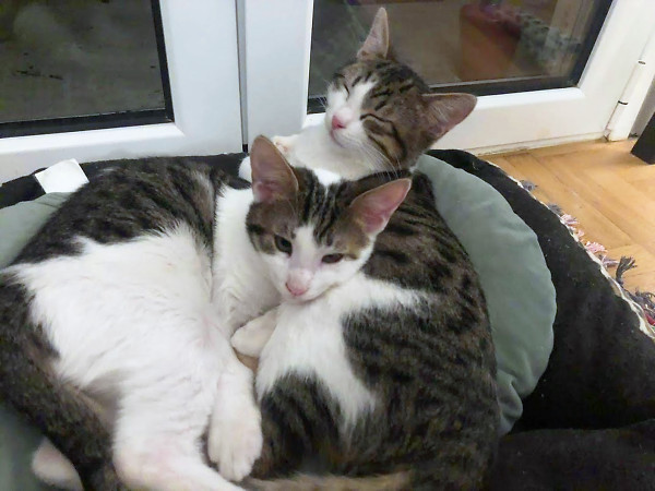Two rescued street kittens cuddled up together on a pillow
