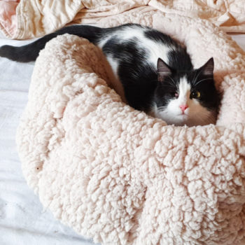 One of two male stray kittens sitting in a fluffy cat bed