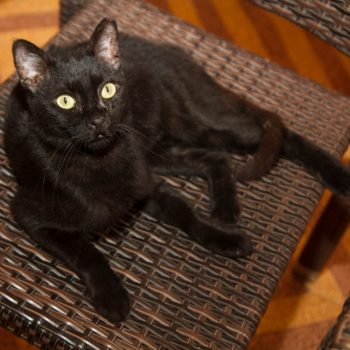 A silky black cat with dazzling green eyes is sitting on a chair.