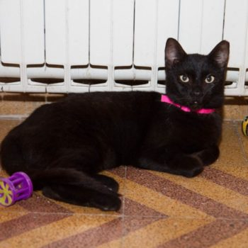 A black cat with silky fur is sitting in front of a radiator with a few toys scattered around her.